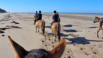 Balade à cheval sur la plage par beau temps