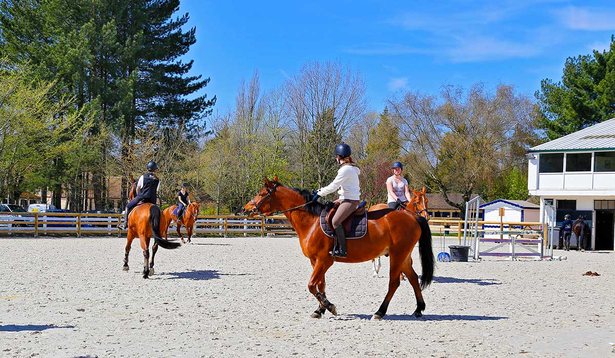 cours cheval entrainement