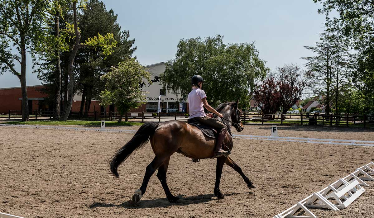cours cheval dressage
