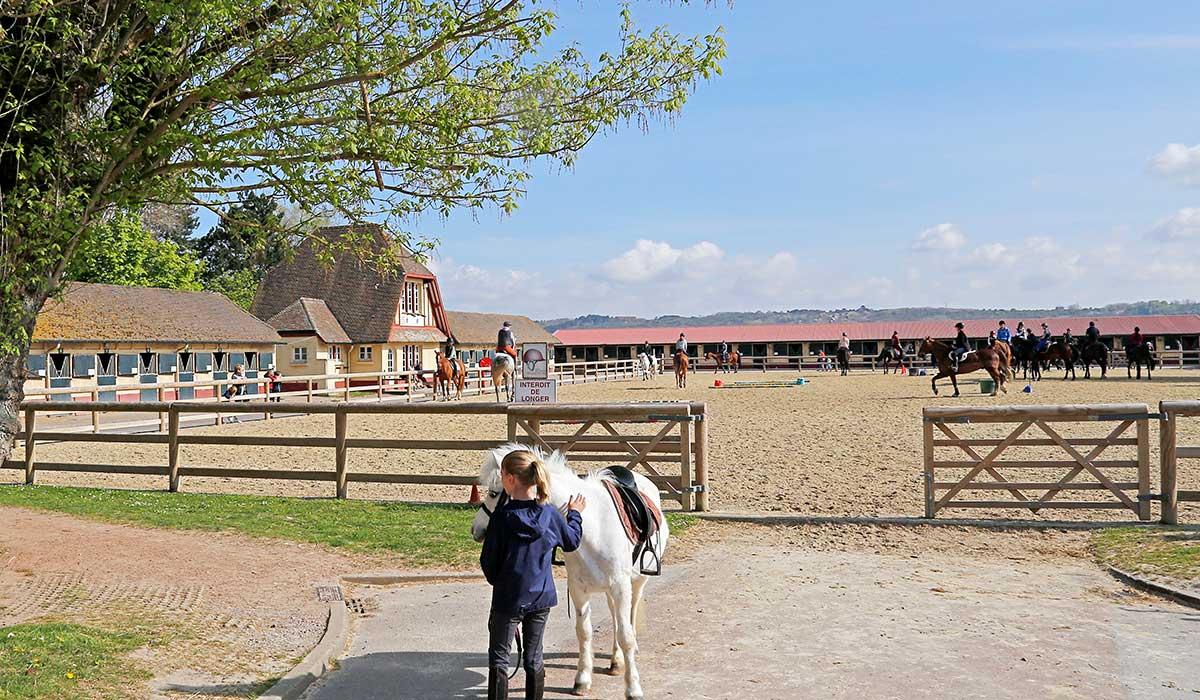 vue carrière boisée poneys