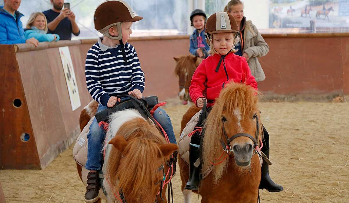Cours poney découverte