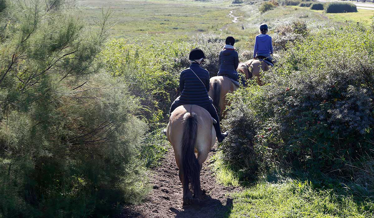galop balade découverte cheval
