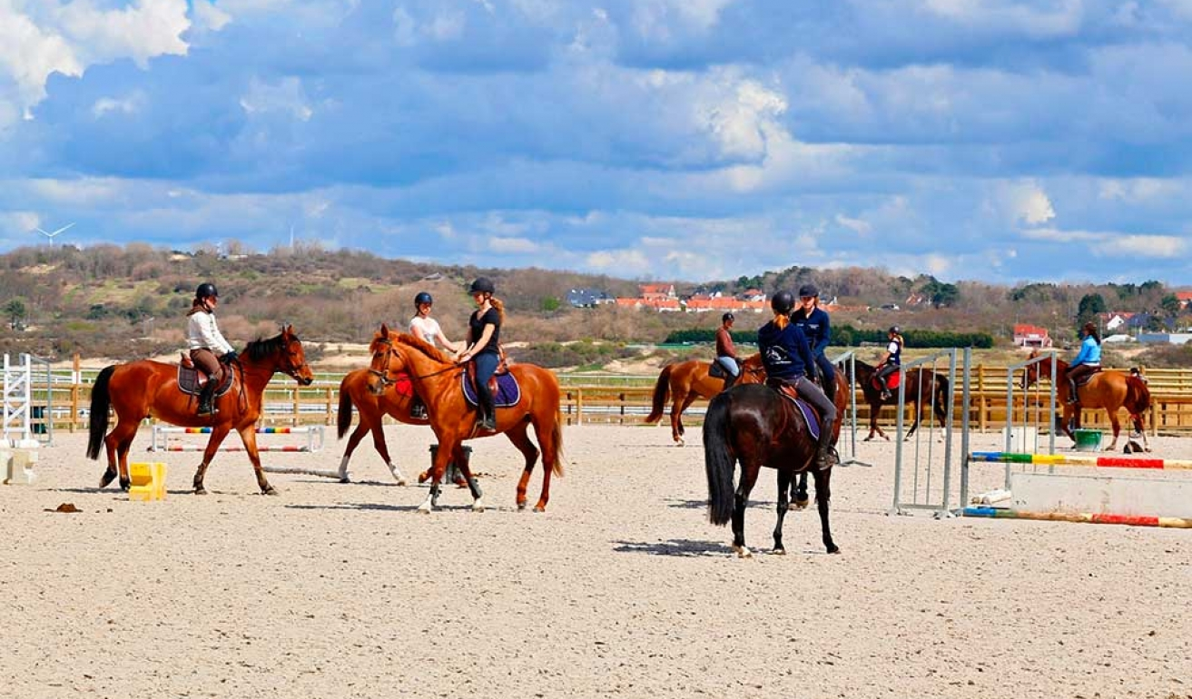 Stage cours cheval